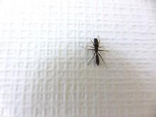 アリのようなクモ_640
